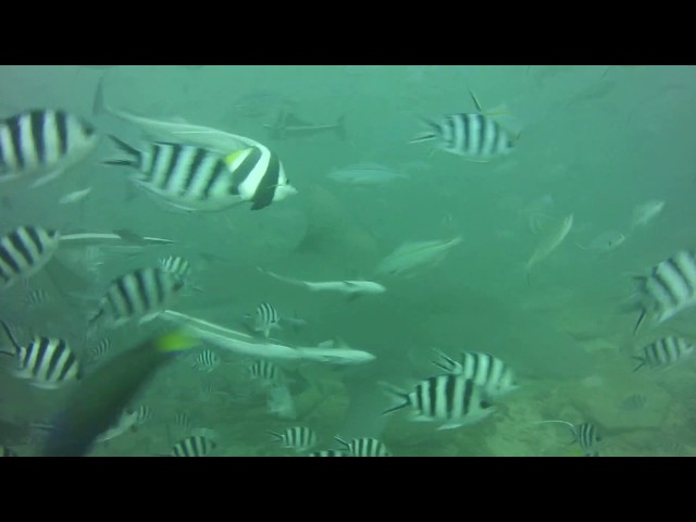Shark dive video by Laura Tolbird