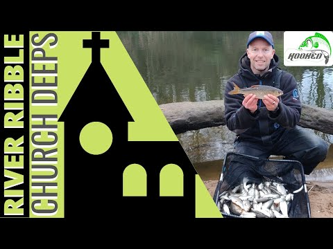 River Ribble Fishing For Roach And Dace