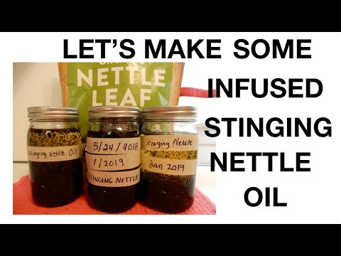 How To Make Infused Stinging Nettle Oil