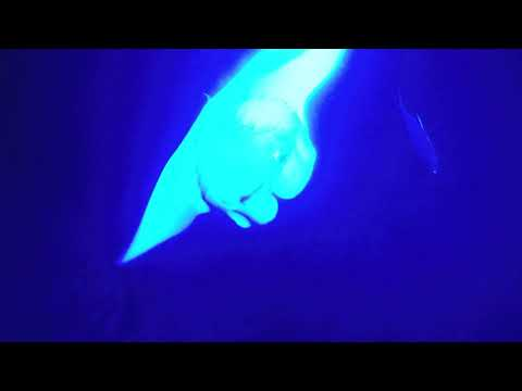 Manta Ray Night Swim, Keauhou Bay, Hawaii, Sea Quest Adventures
