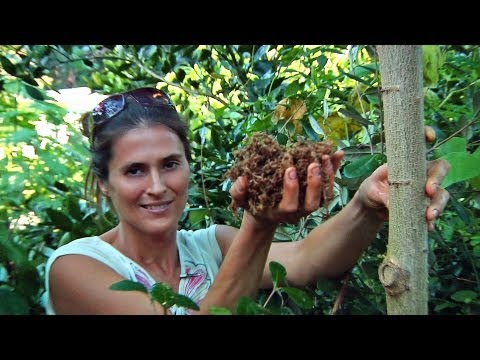Permaculture Paradise: Val & Eli's Fall Chop & Drop!