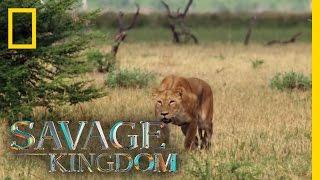 Matsumi, the Queen!   Savage Kingdom