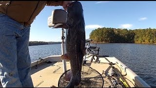 Big Catfish caught on 6 pound test line