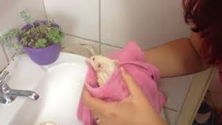 Dumba - Gritando No Banho (a água Vem Morna)