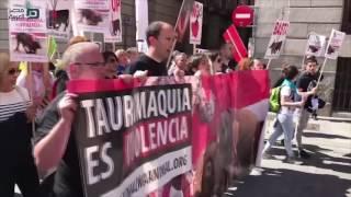 مصر العربية | مظاهرات في إسبانيا لحظر مصارعة الثيران