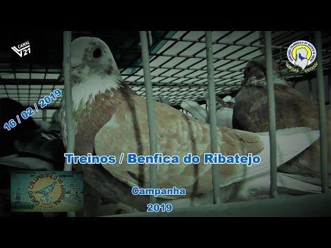 Columbofilia /Encestamento (Treinos) / G.C. Arrifana (Fev 2019) / VL21