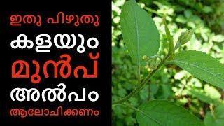 കൊടിത്തുവ ചില്ലറക്കാരിയല്ലെന്നത് നിങ്ങള്ക്കറിയുമോ||Health Tips Malayalam