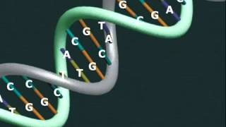 Information embedded in DNA Proves The Existence of God