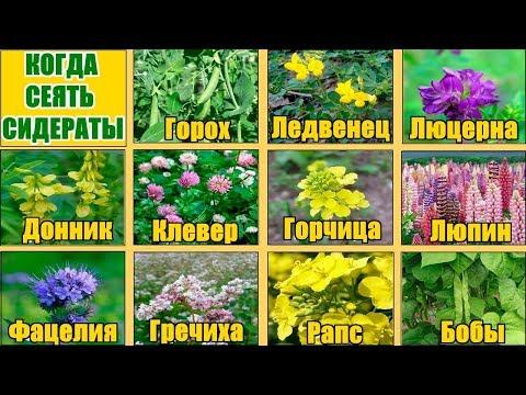 Сидераты осенью / Как структурирова и реанимировать почву / Подготовка почвы к большому урожаю
