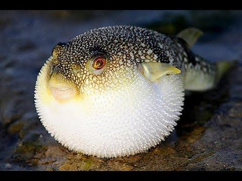 Секси рыбка в сетях фото 656-903