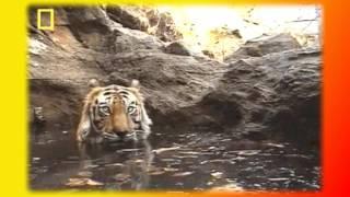 Котята.Кошки.Видео о животных Создай себе хорошее настроение