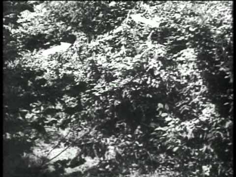 German Snipers - Der deutsche Scharfschütze 1944 (English-German-Audio).avi