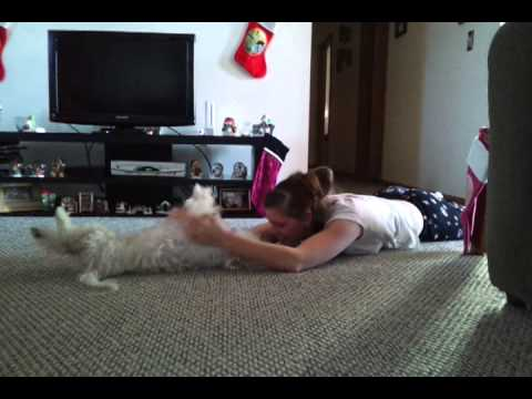 Me and my dog wrestling from YouTube · Duration:  3 minutes 58 seconds