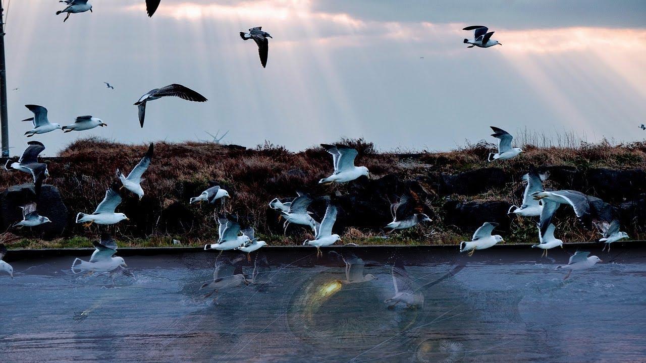 Jangan Berenang Di Dekat Burung Laut yang Berkumpul !
