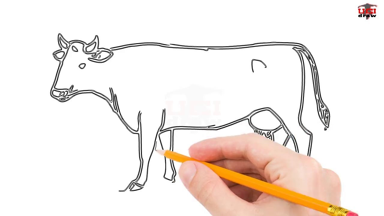 How To Draw A Cow Step By Step Easy For Beginners Kids Simple Cows