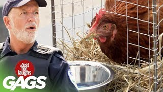 Super-Powered Chicken Takes A Stand Against The Cops