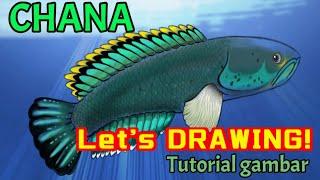 Cara Menggambar Ikan Channa Gachua Snake Head Ikan Gabus Youtube