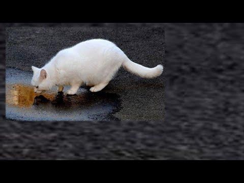 Отравление у кота Ветакадемия11 02 2015