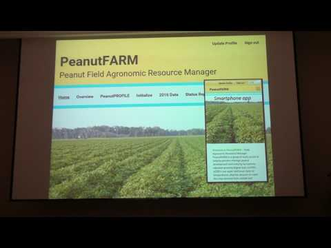 Peanut Physiology as it relates to irrigation/water requirements
