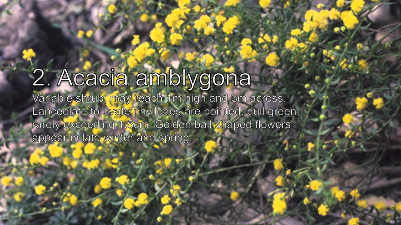 Australian Native Plants Ground Cover 1 Youtube