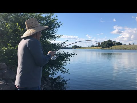 Late Afternoon Bank Fishing On The Sacramento River