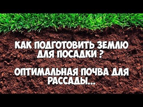 Как подготовить землю для посадки. Оптимальная почва для рассады