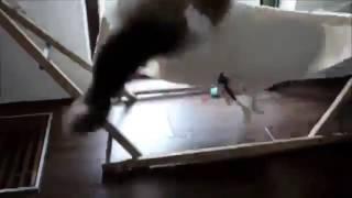 Кот в гамаке)