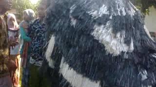 Can Macan asli rang perang laok Madura