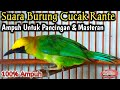 Suara Burung Cucak Ranting Gacor  Mp3 - Mp4 Download