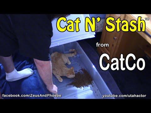 Cat N