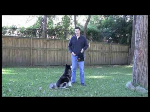 basic-dog-training-skills---00-introduction