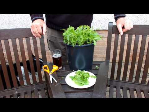 HGV How to grow an amazing mixture of great tasting spicy salad leaves,  in a pot, start to finish