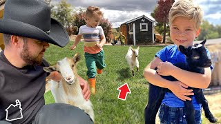 MEET OUR NEW BABY GOATS!