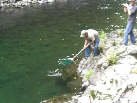 wilson river fishing report steelhead fishing wilson river - YouTube