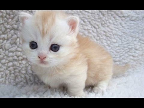 Top 10 Cute Baby Animal Videos 2017 [CUTE]