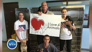 Dog Rescued In Puerto Rico After Hurricane Maria Finds Home   The View
