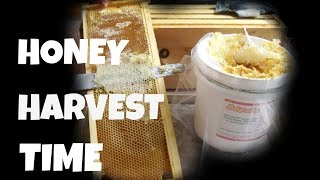 Watch Me Extract Honey from My Bee Frames  -- Bee Vlog#16, 2018