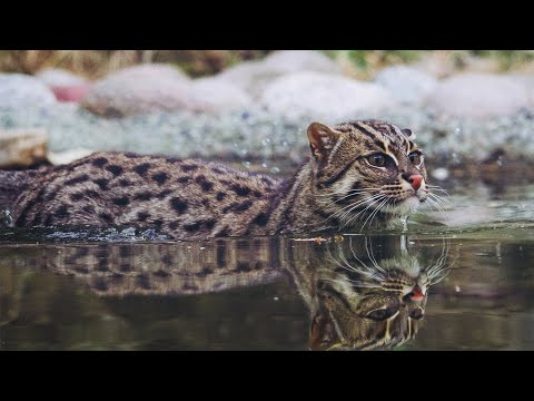 Вопрос: Почему коты возле рыбного отдела , изображают голодный обморок?