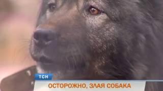 Сторожевые собаки терроризируют жителей микрорайона «Вышка-1» в Перми