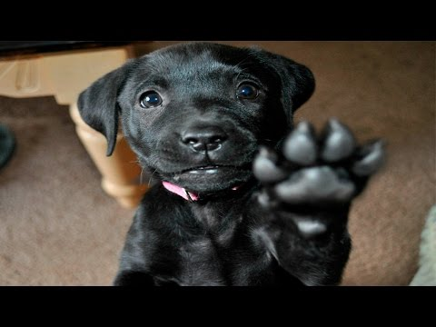 Funny Animals Giving High Fives Compilation 2017