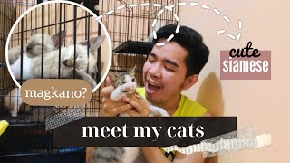Meet My Cats + Siamese Cats Price Philippines   Becoming A Furr Parent Ep.2