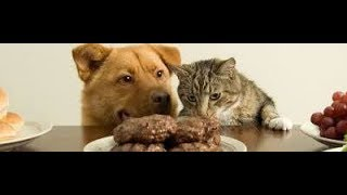 Передвижение веществ у животных. Биология 6 класс