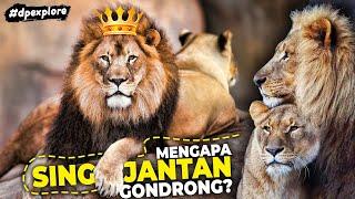 Mengapa Singa Mendapat Gelar Raja Hutan? Apakah Singa Merupakan Hewan Terkuat? #dpexplore