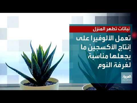 صحتك +| نباتات تطهر المنزل  - نشر قبل 4 ساعة