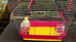ЗНАКОМЬТЕСЬ-НАШ ГОВОРЯЩИЙ попугай КЕША!