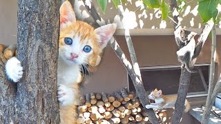 Kittens Climbing Tree - One can't get down!