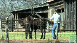 LBJ State Park Sauer-Beckmann Living History Farm, Texas Parks and Widlife [Official] thumbnail