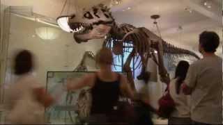 Das Rätsel der fliegenden Dinosaurier [HD]