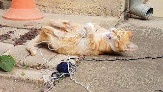 Cats Love Yarn