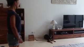 Dog Training - Receiving Visitor